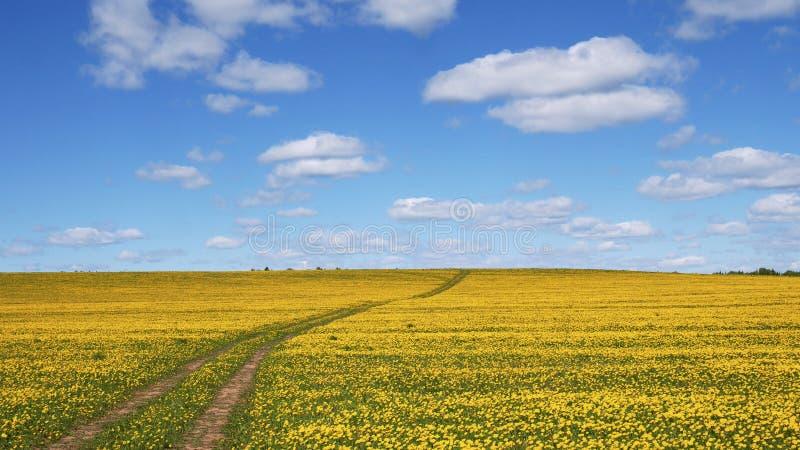 De weg gaat naar de horizon op een gebloeid gebied Natuurlijk landschap De zomer, de lente, dag Versheid en vrijheid horizontaal stock afbeeldingen