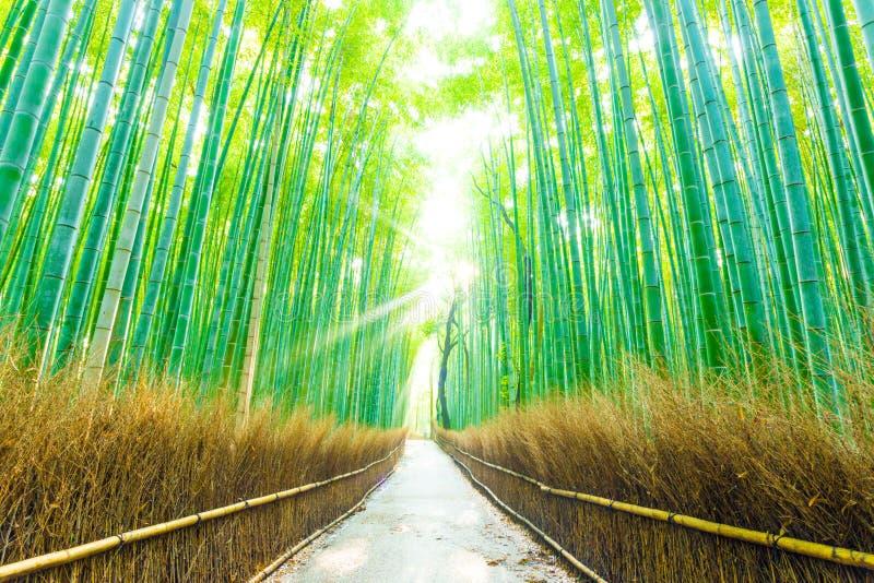 De Weg H van Forest Beams God Rays Straight van de bamboeboom stock foto's