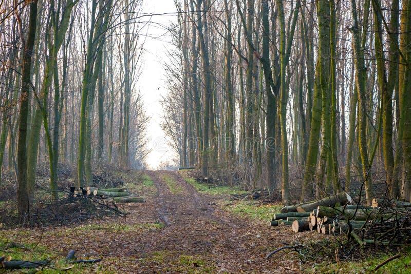 De weg is in het de lentebos, het felling van het bos, het oogsten van firewood_ royalty-vrije stock afbeeldingen