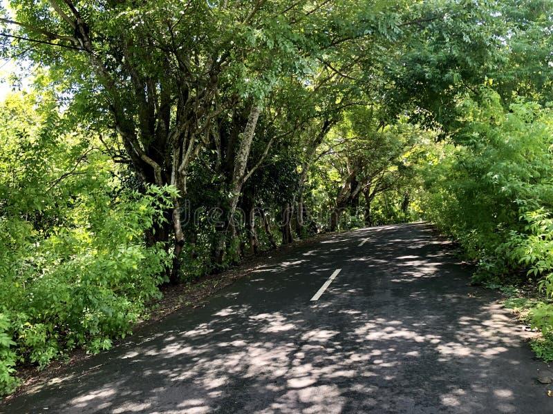 De weg in het midden van bos aan mening van overzees vanaf de bovenkant van heuvel wordt gezien die royalty-vrije stock foto