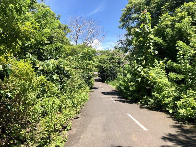 De weg in het midden van bos aan mening van overzees vanaf de bovenkant van heuvel wordt gezien die royalty-vrije stock fotografie