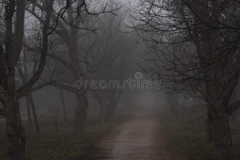 De weg in het Park in de mist stock foto's