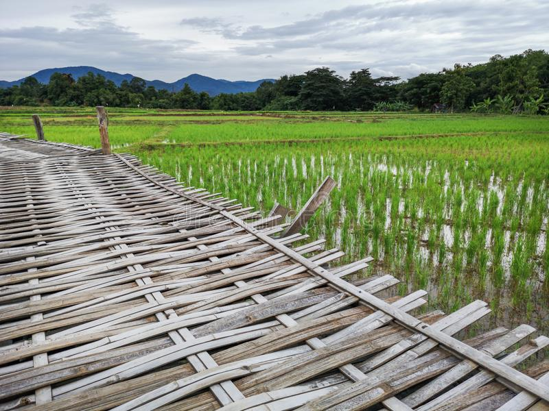 De weg maakte van bamboe in het midden van groen padiegebied met berg op de achtergrond royalty-vrije stock fotografie