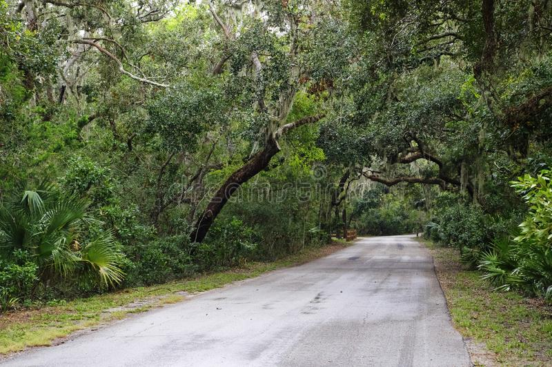 De weg onder Spaans mos hangt in schaduwen van brede takken van eiken bomen royalty-vrije stock afbeelding