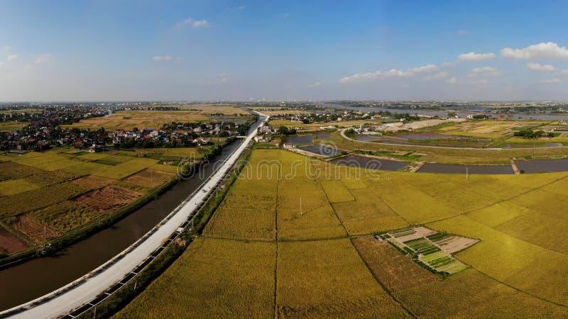 De weg tussen de padievelden is rijp stock foto