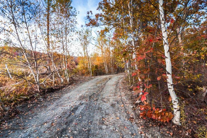 De weg van berklijnen in de herfst stock afbeeldingen