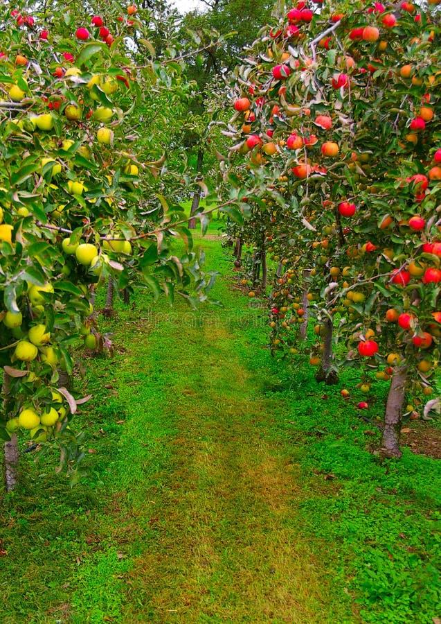 De weg van de appel royalty-vrije stock afbeeldingen