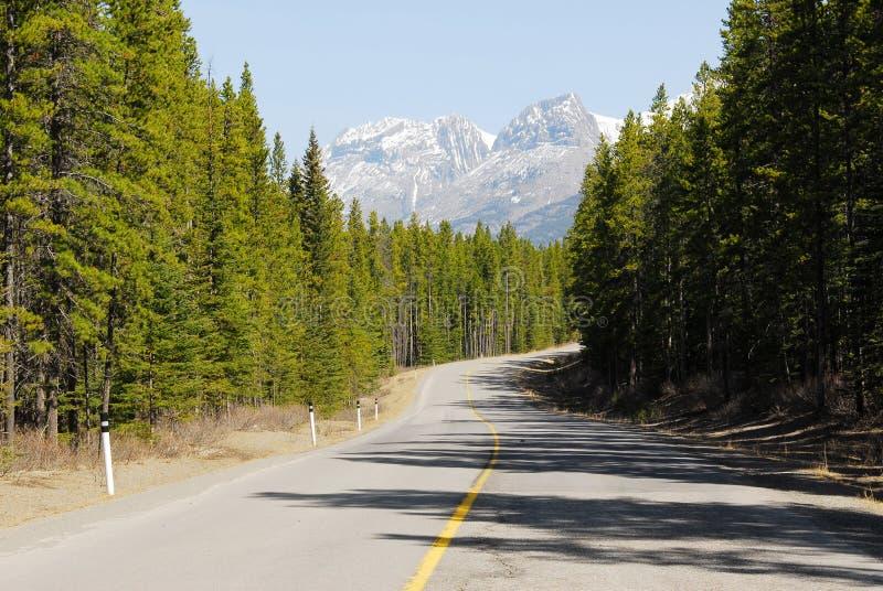 De weg van de berg in bossen stock foto