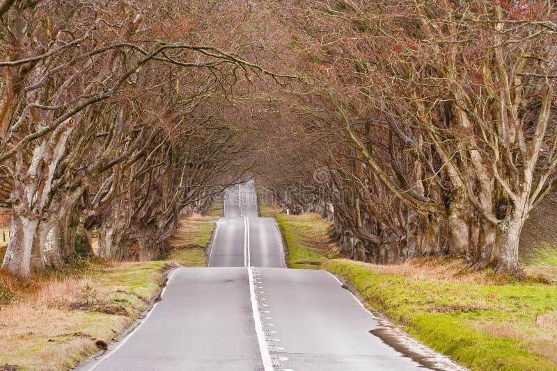 De weg van de beuk royalty-vrije stock afbeelding