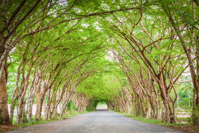 De weg van de boomtunnel stock fotografie