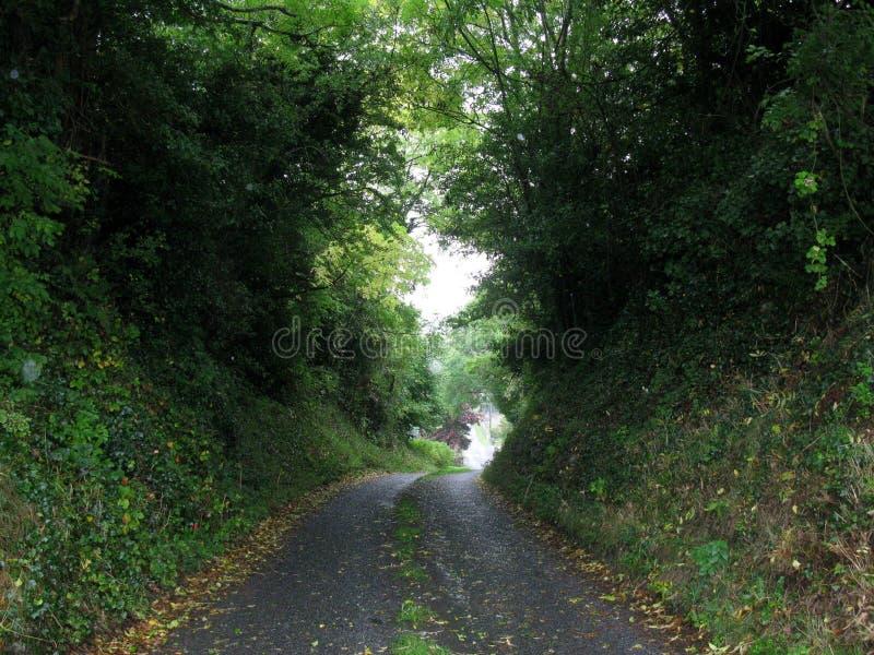 De weg van de boomtunnel, Ierland stock afbeeldingen