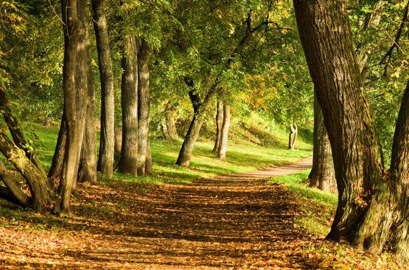 De weg van de daling in bos stock foto's