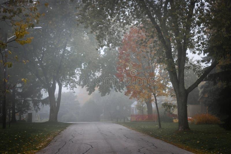 De weg van de daling met bomen in mist stock afbeeldingen
