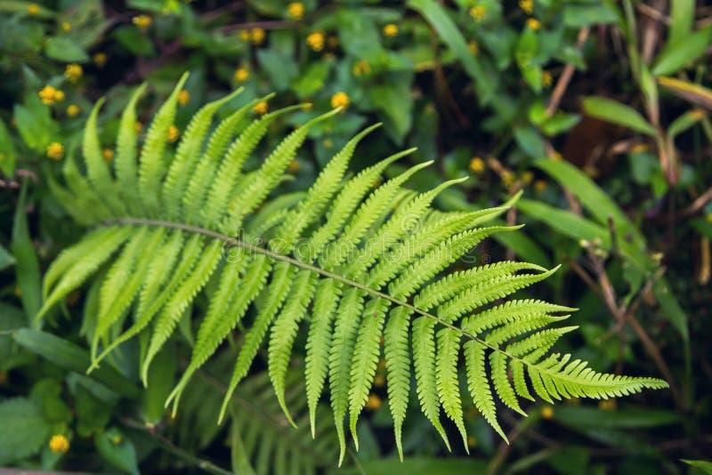 De Weg van de gangsteeg met Groene Bomen in Forest Beautiful Alley In stock foto's