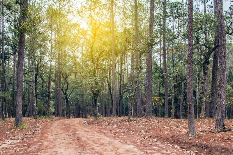 De Weg van de gangsteeg met Groene Bomen in Forest Beautiful Alley In stock fotografie