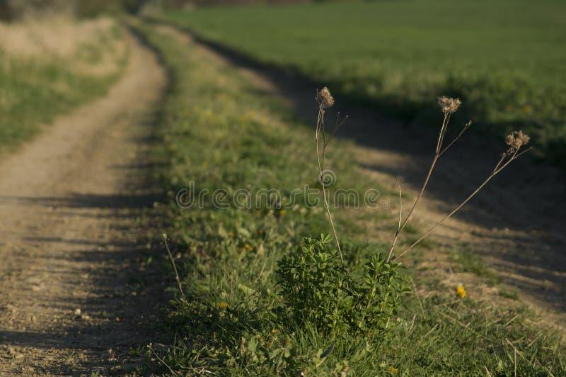 De weg van de Grassteeg royalty-vrije stock foto