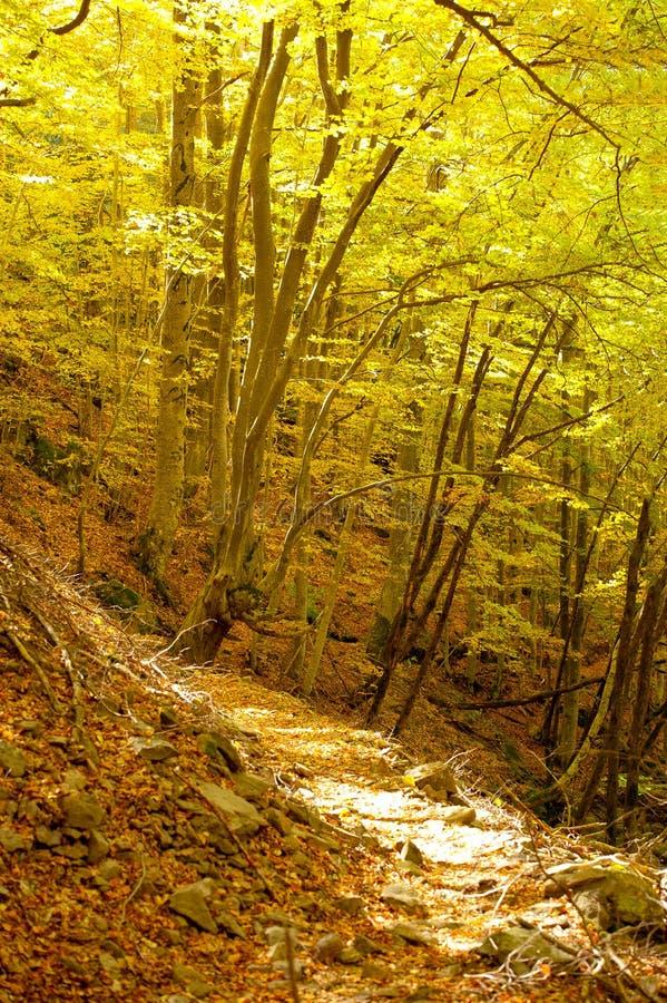 De weg van de herfst stock afbeeldingen