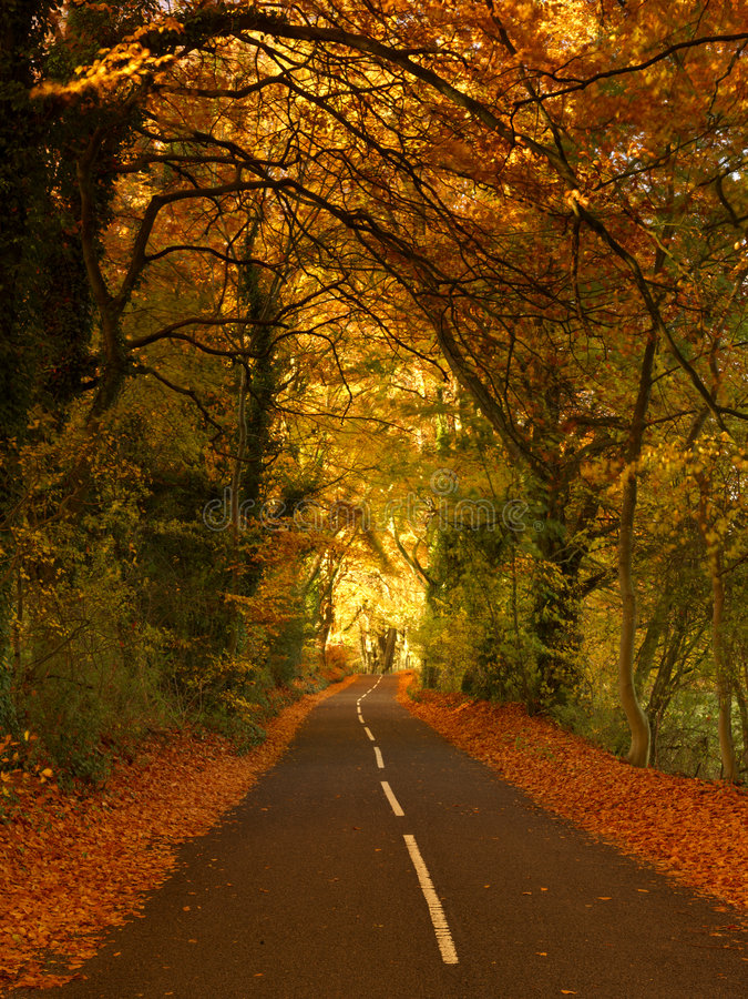 De weg van de herfst stock foto's