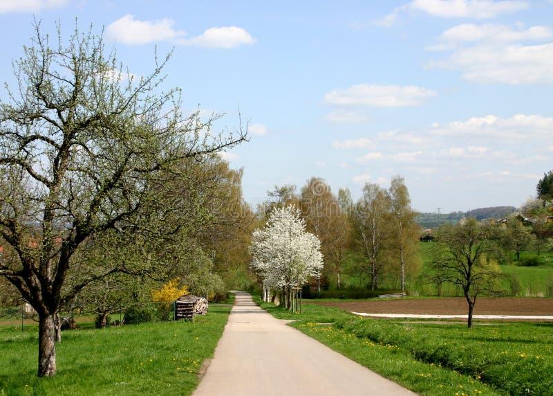 De weg van de lente royalty-vrije stock afbeeldingen