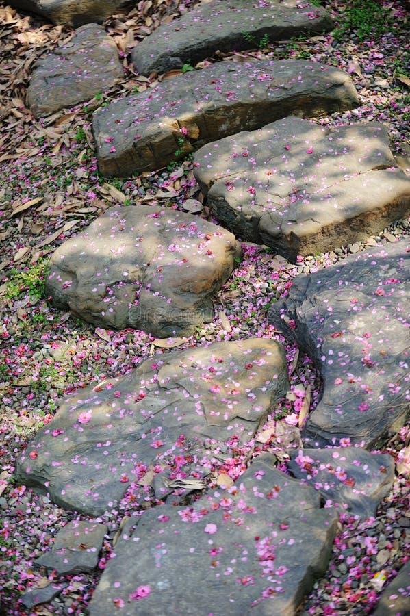 De weg van de steen met het bloemblaadje van de pruimbloesem royalty-vrije stock afbeeldingen