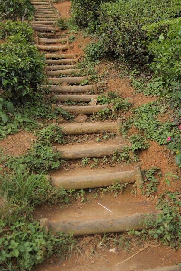 De Weg van de theeaanplanting stock foto