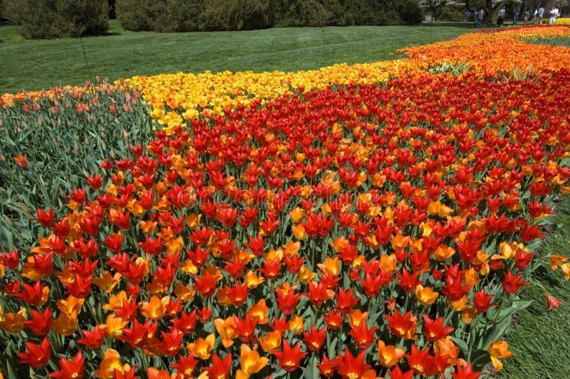 De weg van de tulp royalty-vrije stock afbeeldingen