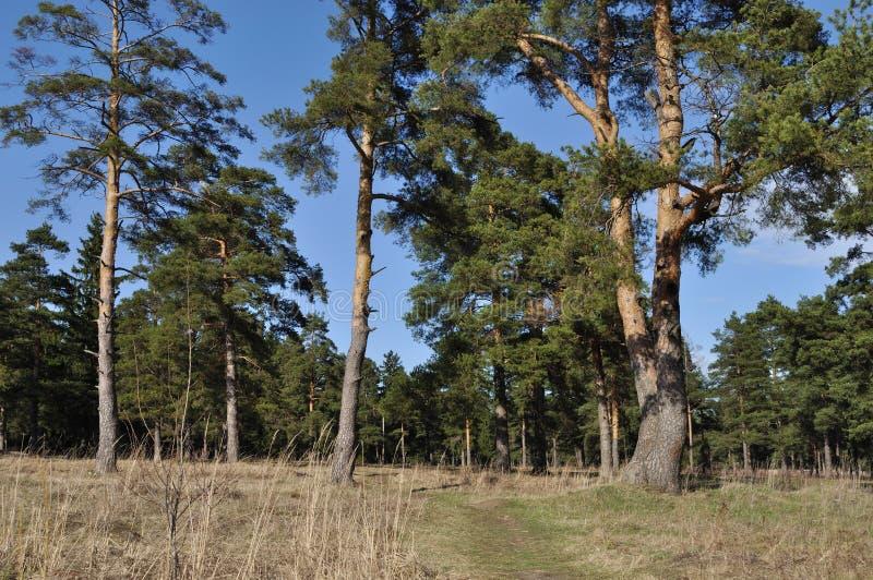 De weg van de voet in de lentebos stock foto's