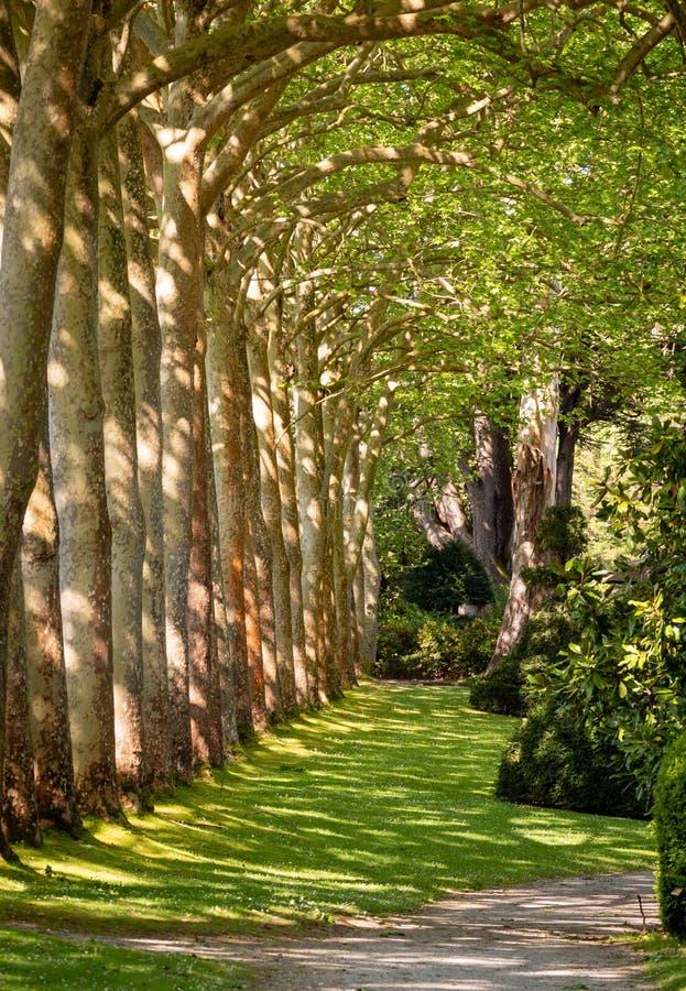 De Weg van de gangsteeg met Groene Bomen in Forest Beautiful Alley In Park royalty-vrije stock fotografie