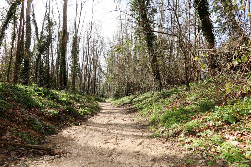 De Weg van de gangsteeg met Groene Bomen in Forest Beautiful Alley Way stock afbeelding
