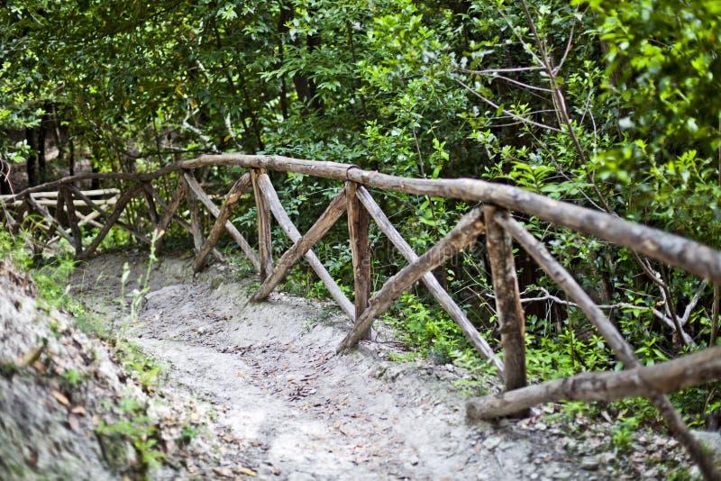 De weg van de gangsteeg met leuning in groene bomen in de zomerbos royalty-vrije stock afbeeldingen