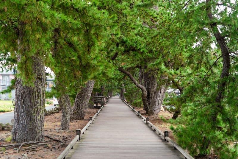 De weg van de gangsteeg met weelderige groene bomen in Shizuoka, Japan manier royalty-vrije stock afbeelding