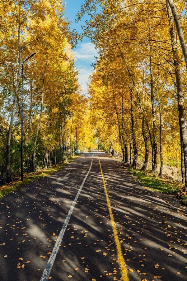 De weg van de herfst in het park De herfstbomen in het park royalty-vrije stock foto's