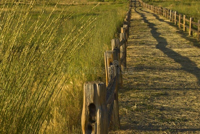 De Weg van het Gebied van de tarwe stock fotografie