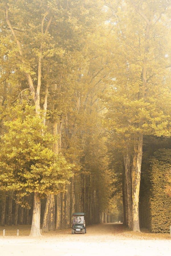 De weg van het de herfstblad stock fotografie