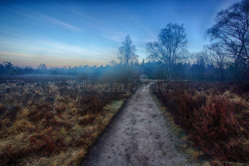 De weg van het land in blauw uur royalty-vrije stock afbeelding