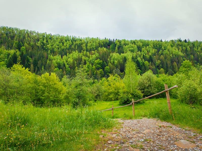 De weg van het land door de groene weide die tot de lentebos leiden op de bergheuvels Natuurlijke landschaps wirh sparren stock foto's