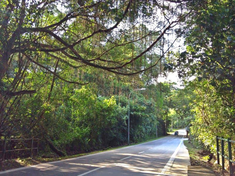 De Weg van Punggol, Singapore stock afbeelding