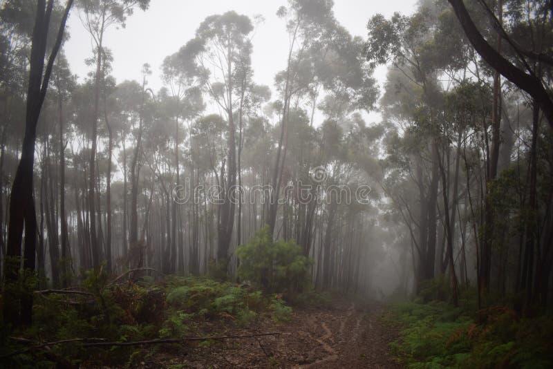 De weg van regenforest hill stock afbeeldingen
