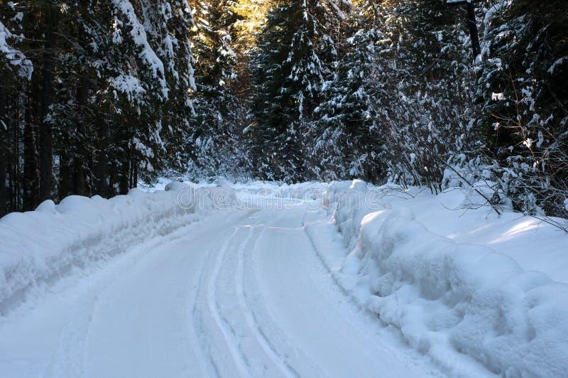 De weg van de winter in het bos royalty-vrije stock fotografie