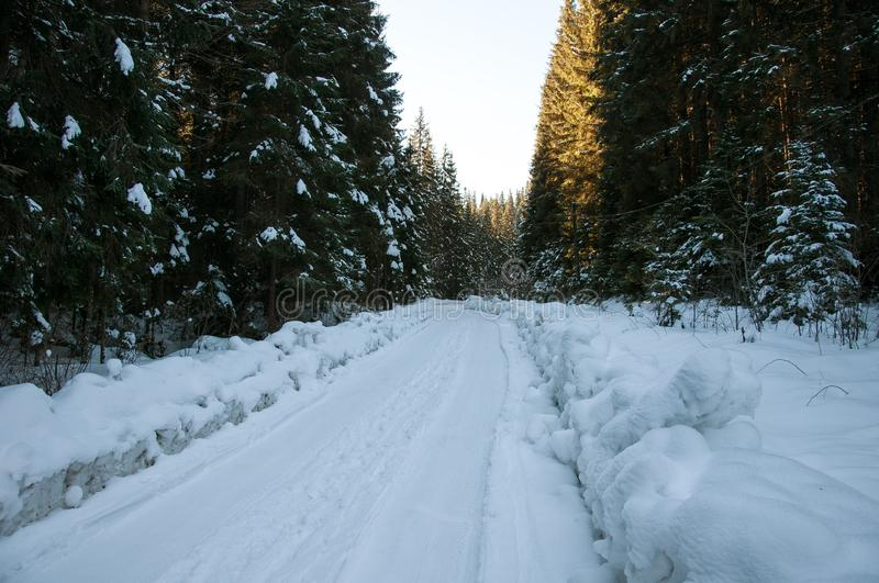 De weg van de winter in het bos stock foto