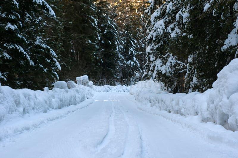 De weg van de winter in het bos royalty-vrije stock foto's