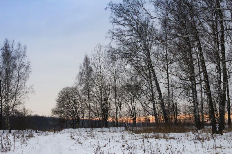 De weg van de winter in het bos royalty-vrije stock afbeelding