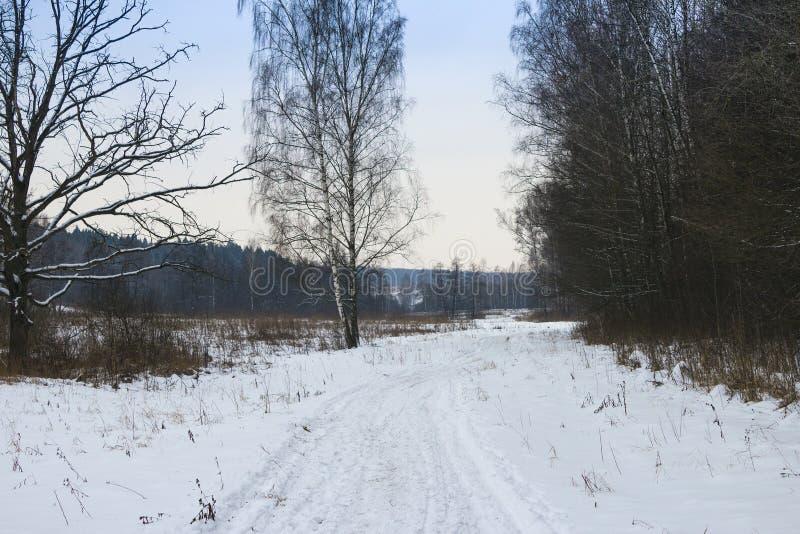 De weg van de winter in het bos stock afbeelding