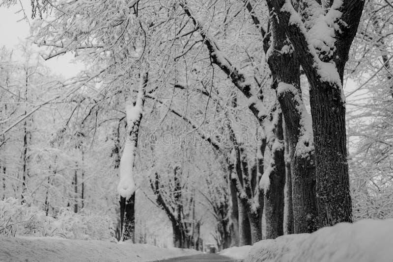 De weg voor voetgangers in de ochtend na een zware sneeuwval royalty-vrije stock foto's