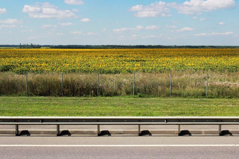 De weglooppas parallel met het zonnebloemgebied in een bewolkte de zomerdag royalty-vrije stock afbeeldingen