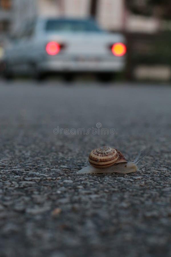 De wegmanier van de slakauto stock fotografie
