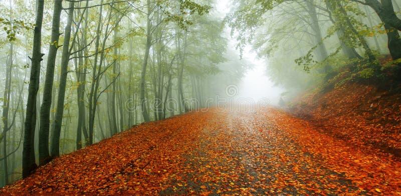 De wegpanorama van de herfst royalty-vrije stock afbeelding
