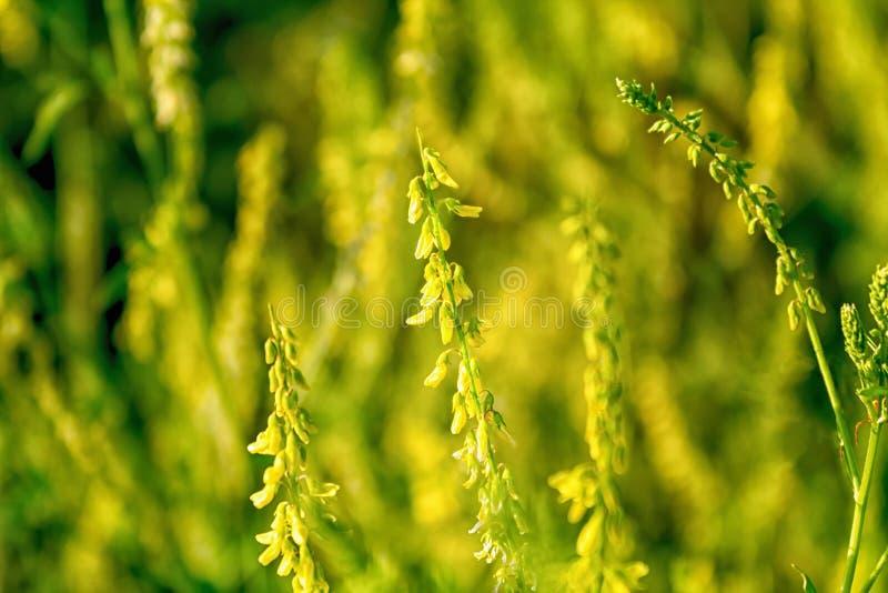 De weide bloeit yelow en groen royalty-vrije stock foto