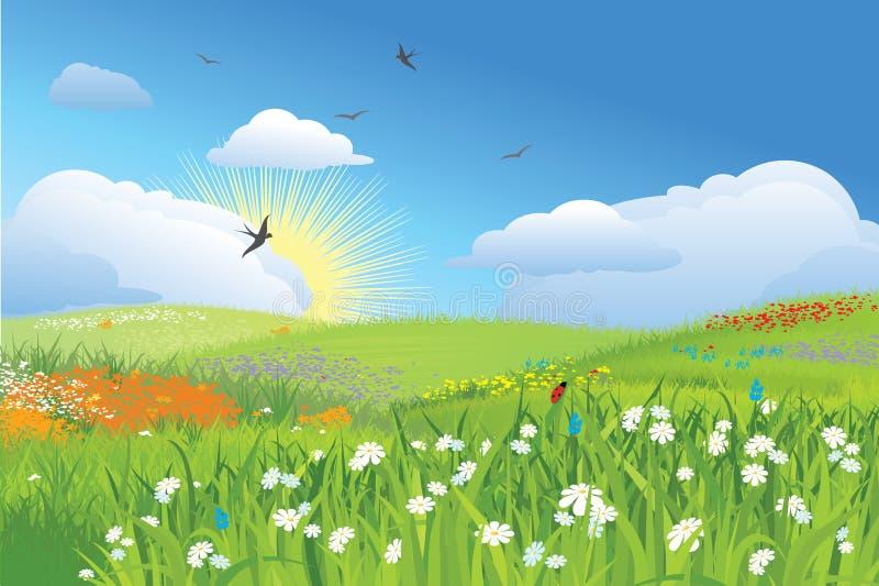 De weide/de bloem en het gras/de vector van Colorfull royalty-vrije illustratie