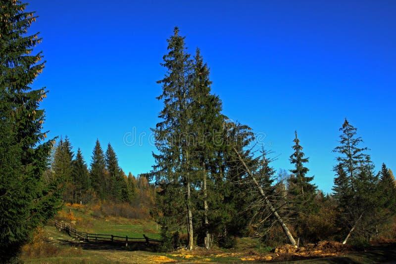 De weide op de rand van het bos royalty-vrije stock afbeeldingen